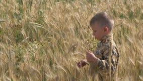 O menino anda em um campo de grão come os spikelets filme