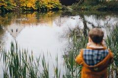 O menino bonito anda e levanta em um parque colorido do outono fotos de stock