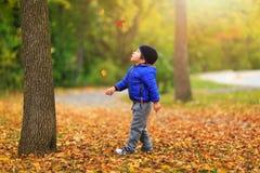 O menino bonito recolhe uma folha dourada da queda no fundo de colorido fotos de stock royalty free