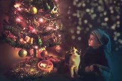 O menino com o gato que olha admiringly a árvore de Natal em C foto de stock