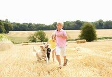 O menino com os cães que funcionam com o verão colheu Fie Imagem de Stock Royalty Free