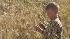 O menino corre em um campo de grão vídeos de arquivo