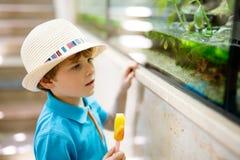 O menino da criança admira répteis e peixes diferentes no aquário Imagens de Stock Royalty Free
