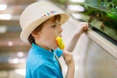 O menino da criança admira répteis e peixes diferentes no aquário Imagem de Stock Royalty Free