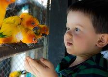 O menino da criança de três anos alimenta papagaios Fotografia de Stock Royalty Free