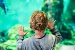 O menino da criança olha peixes no aquário imagens de stock royalty free