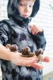 O menino de 6 anos em um revestimento cinzento com uma capa mantém quatro caracóis em sua mão e vista neles Fotos de Stock Royalty Free