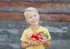 O menino de Littlel recolhe as maçãs no jardim Fotos de Stock