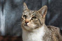 O menino disperso considerável do gato, fecha-se acima da foto imagem de stock