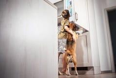 O menino e o cão tentam encontrar algo delicioso no rifregerator Imagem de Stock
