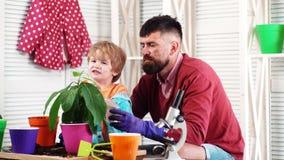 O menino e o homem estão pulverizando uma planta do abacate Jardim da casa para a colheita de frutas e legumes saudáveis Conceito vídeos de arquivo