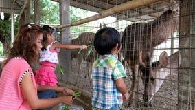 O menino e a menina asiáticos com mãe estão alimentando o animal no jardim zoológico filme