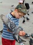 O menino está alimentando os pássaros imagens de stock royalty free