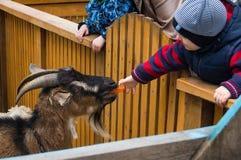 O menino está alimentando uma cabra nova em um jardim zoológico imagens de stock