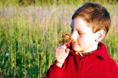 O menino está cheirando morangos fotos de stock royalty free