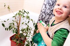 O menino está importando-se com uma planta da casa no banheiro Ficus Benjamina imagens de stock