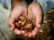 O menino manteve os escudos do inseto em suas mãos imagens de stock royalty free
