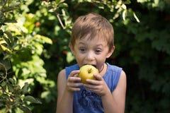 O menino morde ansiosamente a maçã que guarda o com ambas as mãos fotografia de stock royalty free