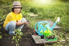 O menino no jardim admira a planta antes de plantar Sprou verde imagens de stock royalty free