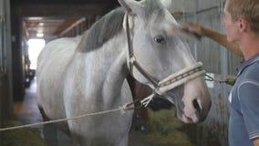O menino novo limpa uma cabeça do ` s do cavalo em uma tenda O homem limpa um cavalo branco da poeira e da sujeira com a escova C filme