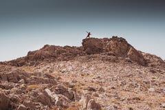 O menino novo tem o divertimento em conceitos de uma liberdade rochosa do deserto e do estilo de vida e do esporte da aventura fotos de stock royalty free
