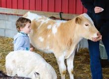 O menino olha Person Feed uma vitela Fotos de Stock Royalty Free