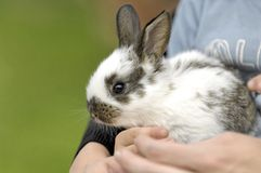 O menino pets o coelho Fotografia de Stock Royalty Free