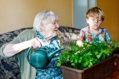 O menino pré-escolar pequeno ativo da criança e as plantas molhando da salsa da avó grande com água podem em casa fotografia de stock