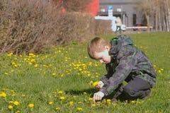 O menino recolhe dentes-de-leão no parque da cidade do gramado na primavera imagem de stock
