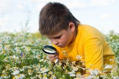 O menino vê a lupa das flores Imagem de Stock Royalty Free