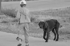 O menino vem aos cães dispersos Fotos de Stock