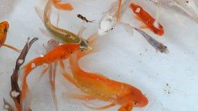 O mercado de peixes em Hong Kong Goldfish decorativo video estoque