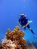 O mergulhador admira o coral do incêndio. Fotografia de Stock