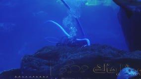O mergulhador de mergulhador é mergulhado no aquário enorme e em limpar o, o tubarão grande e os peixes vídeos de arquivo