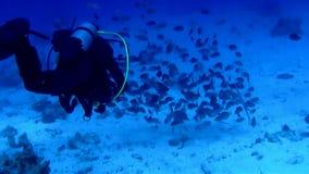 O mergulhador de mergulhador no vermelho vê filme