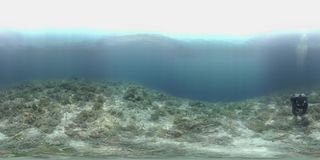 o mergulhador de 360 vr nada em um recife de corais video estoque