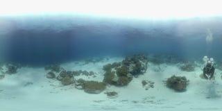 o mergulhador de 360 vr nada em um recife de corais filme