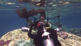 O mergulhador livre modelo subaquático levanta para a câmera no fundo dos corais no Mar Vermelho vídeos de arquivo