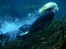O mergulho Fotografia de Stock Royalty Free