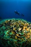 O mergulho autônomo acima do coral abaixo do barco bunaken sulawesi Indonésia subaquática fotografia de stock