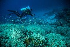 O mergulho autônomo da água azul do mergulhador bunaken o oceano do recife do mar de Indonésia Imagens de Stock