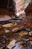 O metro em Zion National Park Fotografia de Stock