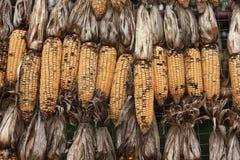 O milho foi danificado imagens de stock