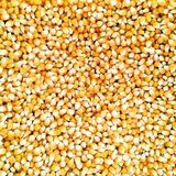 O milho semeia o fundo Imagens de Stock Royalty Free