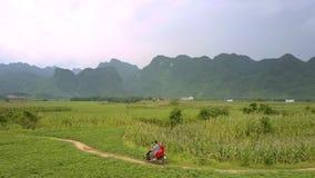 O milho verde cresce no grande campo contra montanhas altas filme