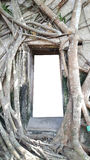 O modelo da porta antiga e da janela do tijolo do molde claro vazio do quadro que cercam com árvore enraíza Imagem de Stock