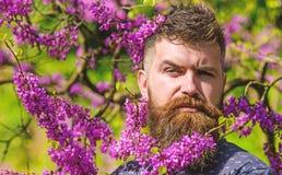 O moderno aprecia a mola perto da flor violeta Homem com barba e bigode na cara restrita perto das flores no dia ensolarado beard foto de stock