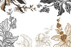 O molde do café diferente ramifica com feijões e folhas no fundo branco Coleção do vetor esboço Fotos de Stock Royalty Free