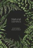 O molde do inseto ou do cartaz com samambaias, ervas selvagens, plantas herbáceas verdes entrega tirado no fundo preto naughty ilustração royalty free