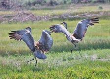 O monte da areia Cranes a aterrissagem Imagens de Stock Royalty Free